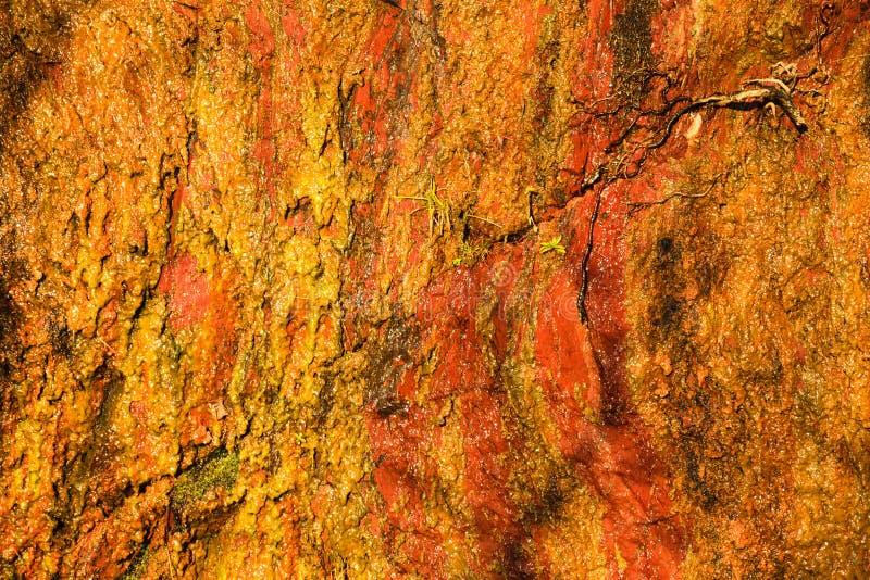 Fond de la texture en pierre humide orange de mur de roche extérieure photos stock