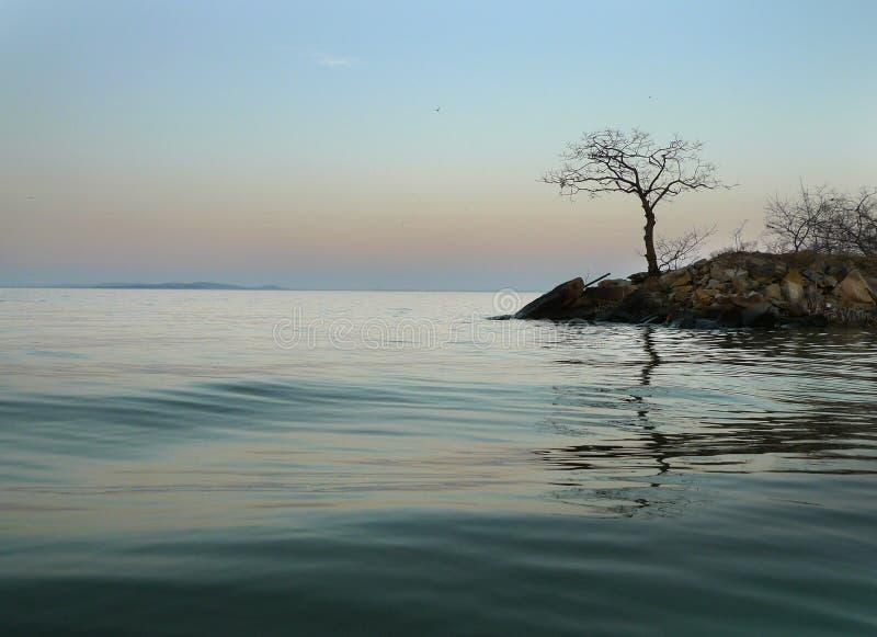 Fond de lac avec l'arbre solitaire photos stock