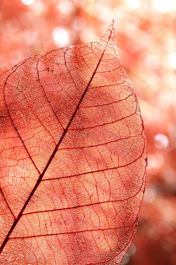 Fond de lame d'automne photographie stock libre de droits