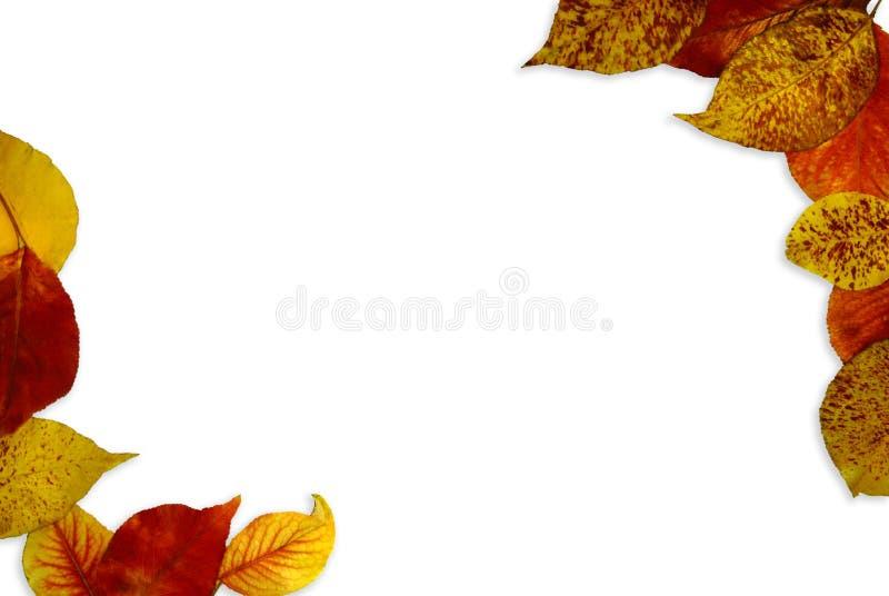 Fond de lame d'automne