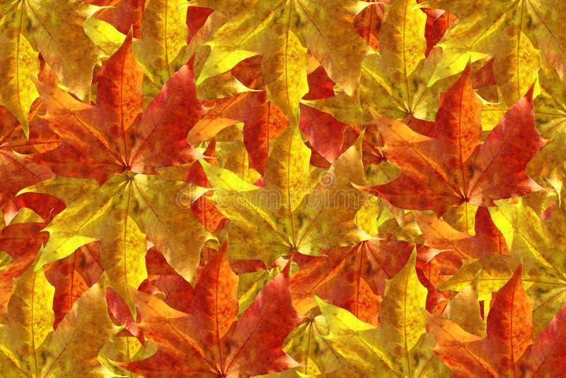 Fond de lames d'automne photo libre de droits