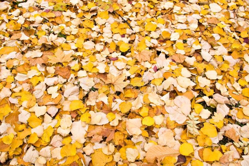 Fond de lames d'automne photos libres de droits