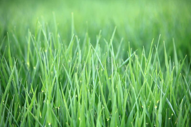 Fond de lames d'herbe verte photos libres de droits