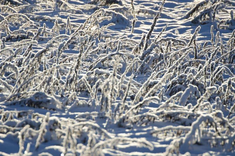 Fond de lumière du soleil congelé par Milou d'herbe de pré image libre de droits