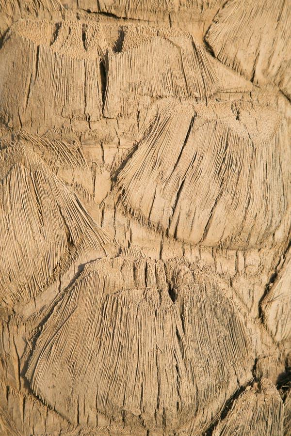Fond de lumière naturelle - fin de palmier  image stock
