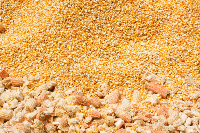 Fond de maïs images stock