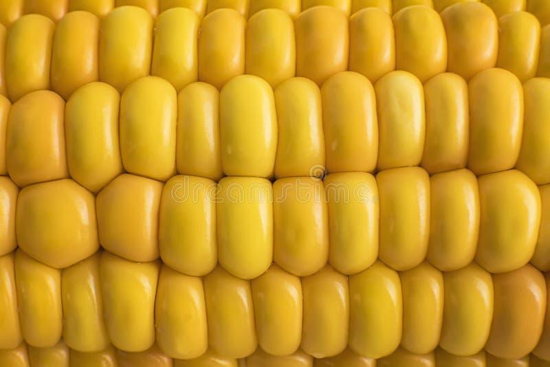 Fond de maïs de bonbon Texture de grains de Goldish Couleur jaune de maïs Seguence naturel des grains de maïs Mûr et bouche image libre de droits