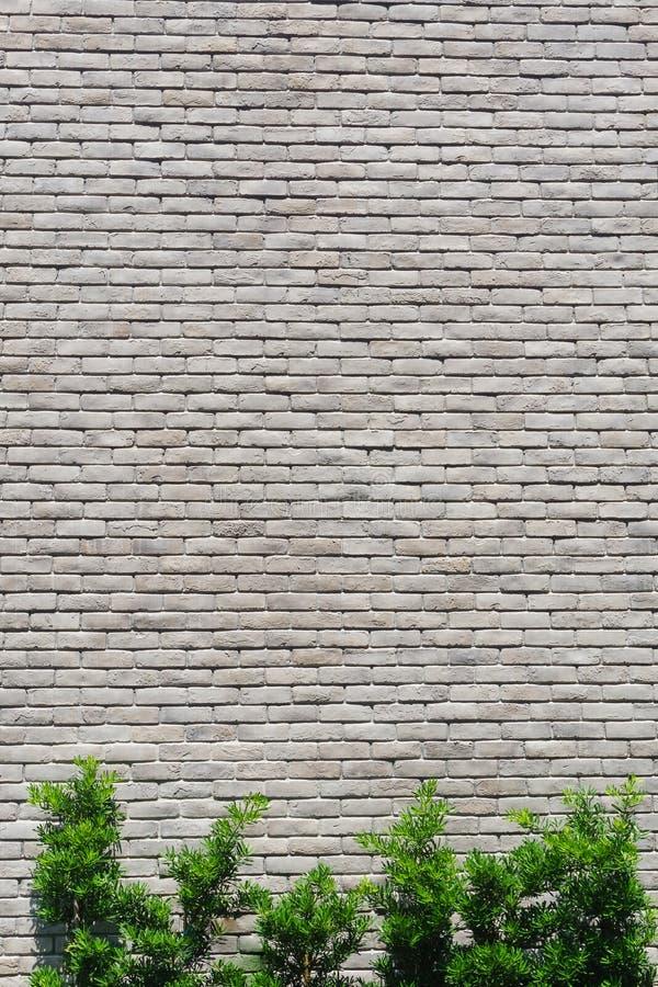 Fond de marbre blanc de mur de briques et arbre vert photo stock