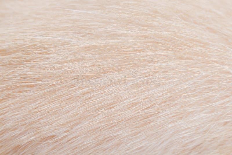 Fond de mod?les de fourrure de chat, texture douce de foyer de nature brun clair image stock