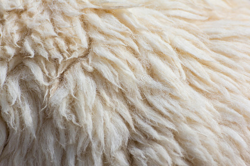 Fond de moutons d'ouatine photos stock