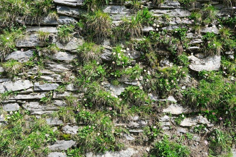 Download Fond De Mur Avec Des Fleurs Alpes Européennes Plein Cadre Naturel Image stock - Image du architecture, horizontal: 76078395