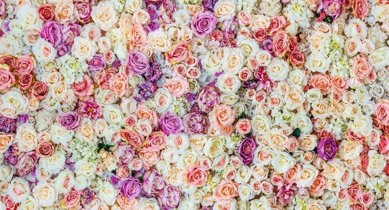 Fond de mur de fleurs avec stupéfier les roses rouges et blanches, épousant la décoration, image libre de droits