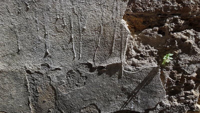 Fond de mur La plante verte fraîche minuscule se développe du mur en pierre délabré de ciment image libre de droits