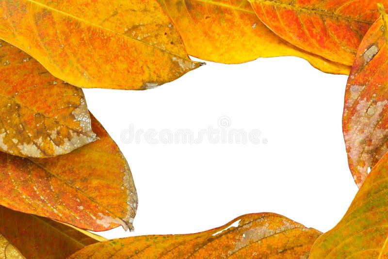 Fond de nature photographie stock