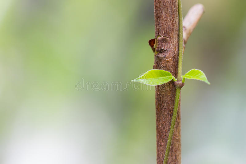 Fond de nature image stock
