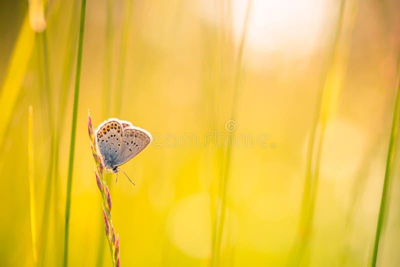 Fond de nature avec le papillon et le beau fond de pré d'été de ressort Nature inspirée Plan rapproché tranquille de nature photographie stock
