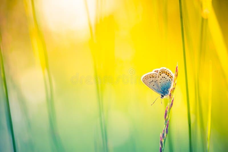Fond de nature avec le papillon et le beau fond de pré d'été de ressort Nature inspirée Plan rapproché tranquille de nature photo libre de droits