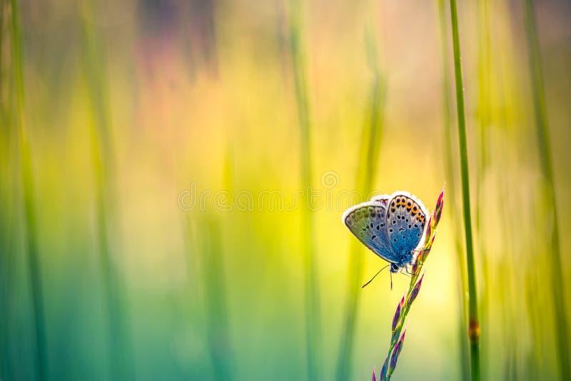 Fond de nature avec le papillon et le beau fond de pré d'été de ressort Nature inspirée Plan rapproché tranquille de nature photo stock