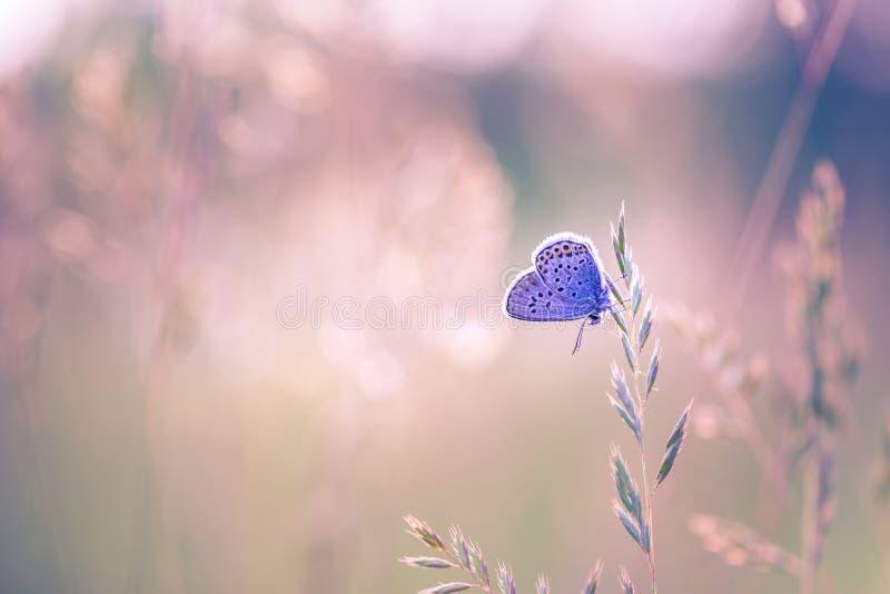 Fond de nature avec le papillon et le beau fond de pré d'été de ressort Nature inspirée Plan rapproché tranquille de nature images stock