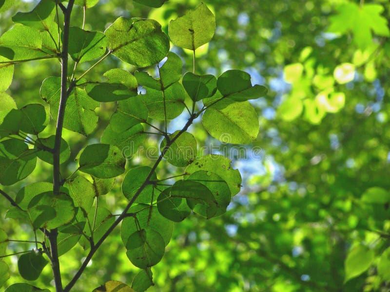 Fond de nature avec les feuilles vertes photographie stock