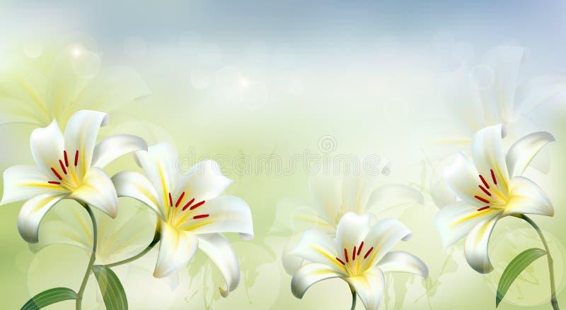Fond de nature avec les lis blancs. illustration libre de droits