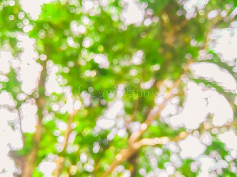 Fond de nature brouillé par vert abstrait photographie stock