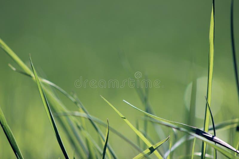 Fond de nature d'été d'herbe verte photographie stock