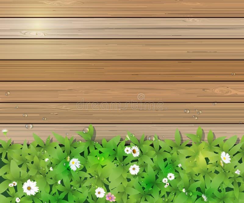 Fond de nature de source Plante d'herbe verte et de feuille, fleurs blanches de Gerbera, de marguerite et lumière du soleil au-de illustration stock