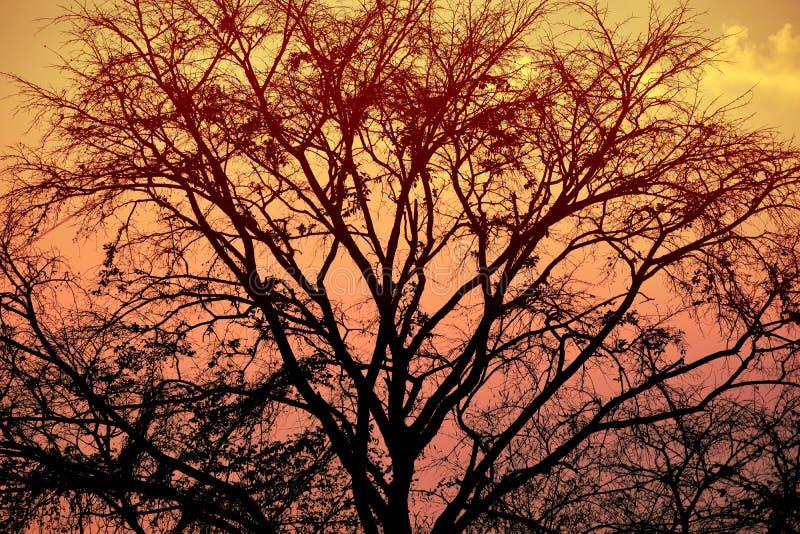 Fond de nature et photographie d'outdoour et de coucher du soleil photo stock