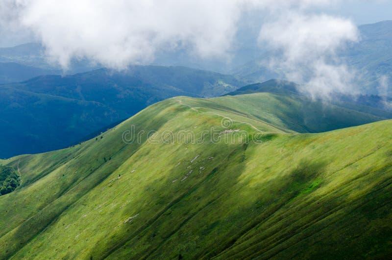 Fond de nature de flanc de coteau vert pendant l'été image stock