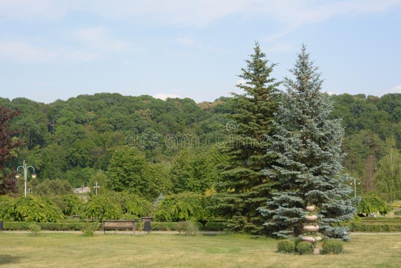 Fond de nature, image en plein air Belle scène de parc en parc public images libres de droits