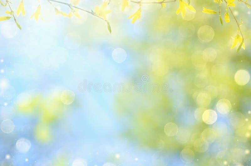 Fond de nature de ressort avec les fleurs jaunes sur les branches et le ciel bleu, l'espace de copie image stock