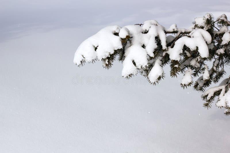 Fond de Noël de neige de l'hiver images libres de droits
