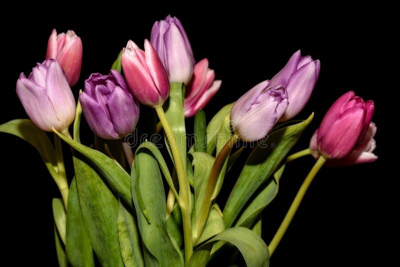 Fond de noir de bouquet de fleurs de tulipes image libre de droits