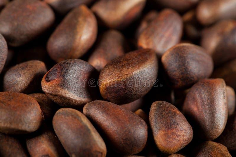 Fond de noix de cèdre image stock