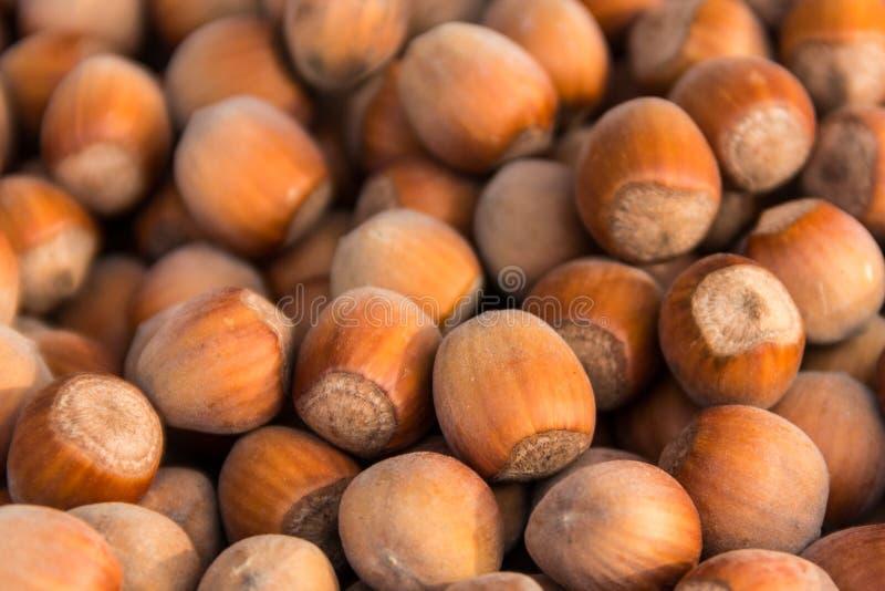 Fond de nourriture des noisettes Plan rapproché frais d'aveline images libres de droits