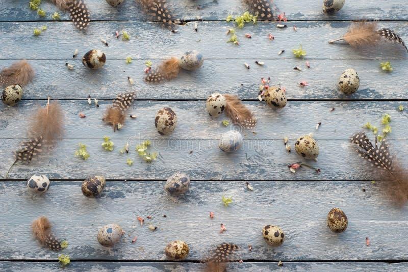 Fond de Pâques, oeufs de caille, plumes et chrysanthème jaune au-dessus de fond en bois image libre de droits