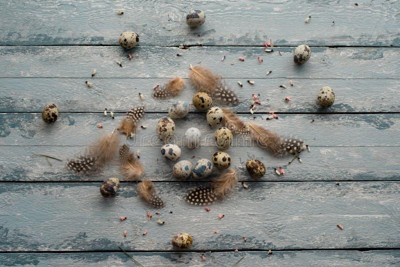 Fond de Pâques, oeufs de caille, plumes et chrysanthème jaune au-dessus de fond en bois photographie stock libre de droits