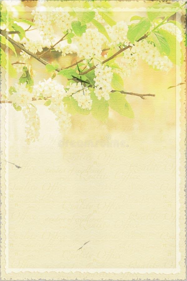 Fond de papier abstrait de ressort avec la branche de la cerise d'oiseau en fleur photos stock