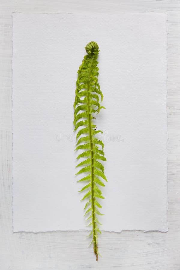 Fond de papier avec la feuille de fougère photo stock