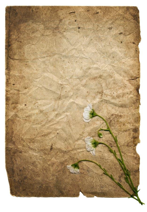 Fond de papier avec les fleurs blanches illustration libre de droits