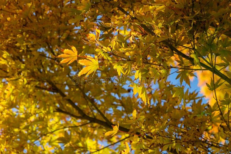 Fond de paysage d'automne photos stock