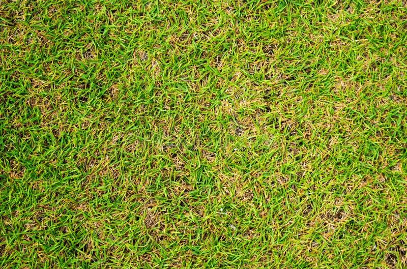 Fond de photo d'herbe verte Fond de terrain de football d'herbe verte photos libres de droits