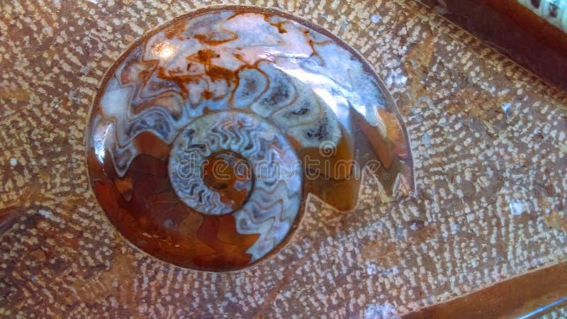 Fond de pierre gemme d'ammonite photos stock