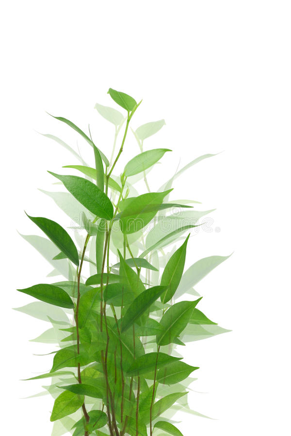 Fond de plante verte photos stock