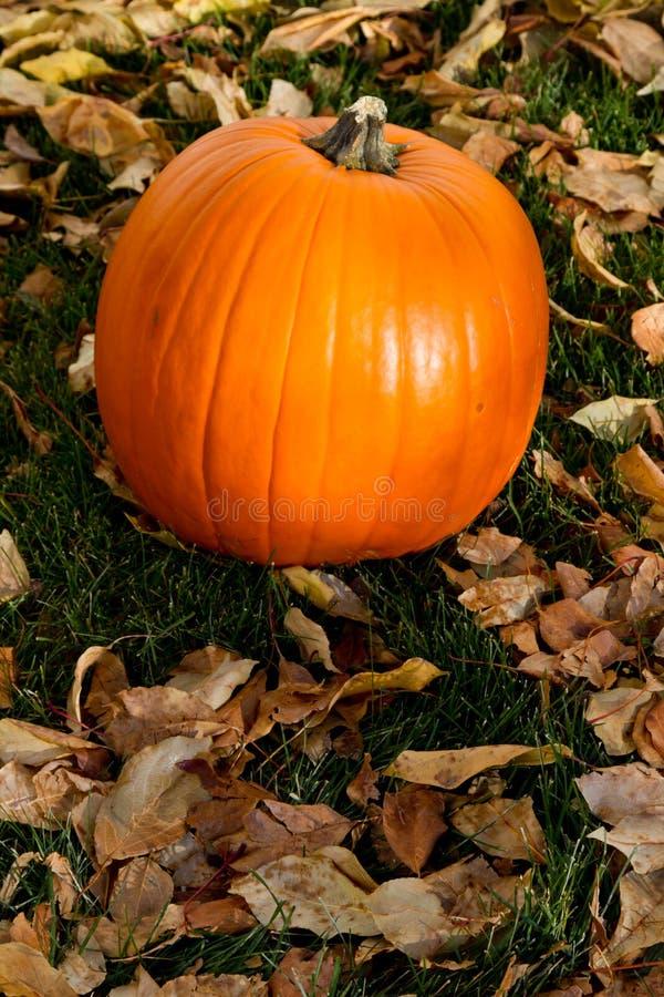 Fond de potiron d'automne photographie stock