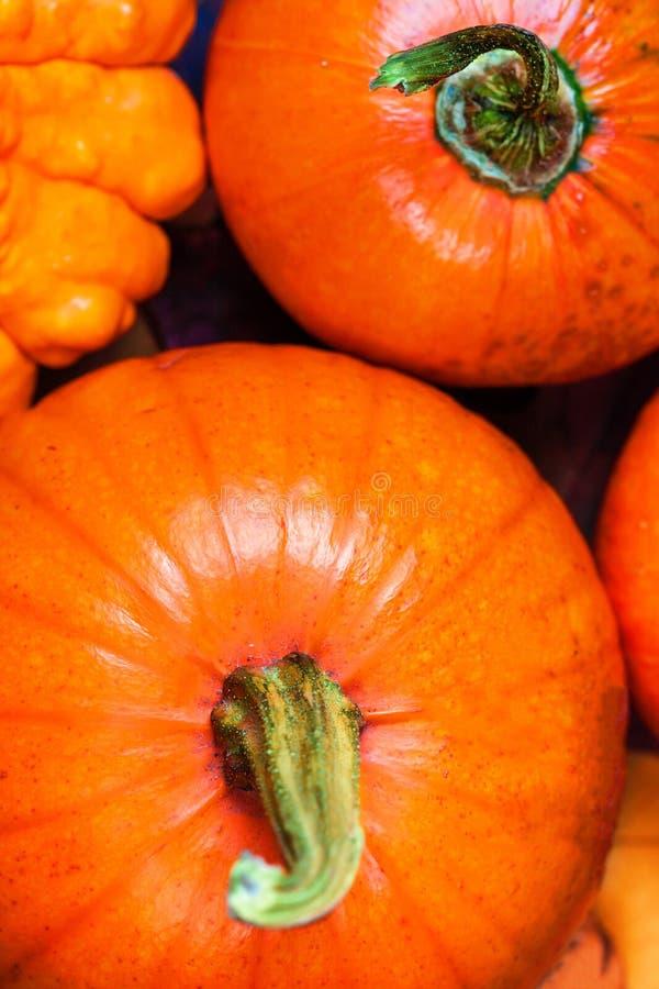 Fond de récolte ou de thanksgiving avec des potirons, des pommes et fal image stock