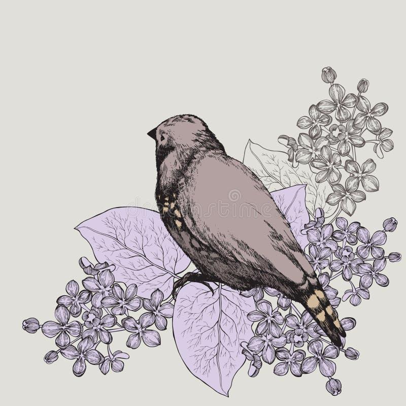 Fond de ressort avec l'oiseau et un lilas, main-dessin Vecteur illustration libre de droits
