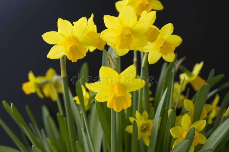 Fond de ressort avec la fleur jaune dans le premier plan image stock
