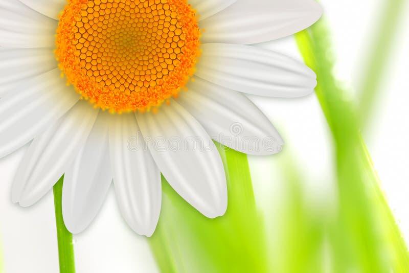 Fond de ressort de fleurs illustration de vecteur